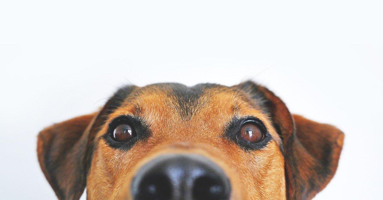 Niechciany pasożyt na psiej skórze
